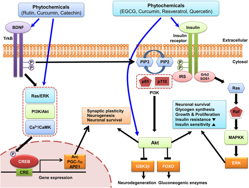 BDNF and insulin signaling pathways activated by phytochemicals