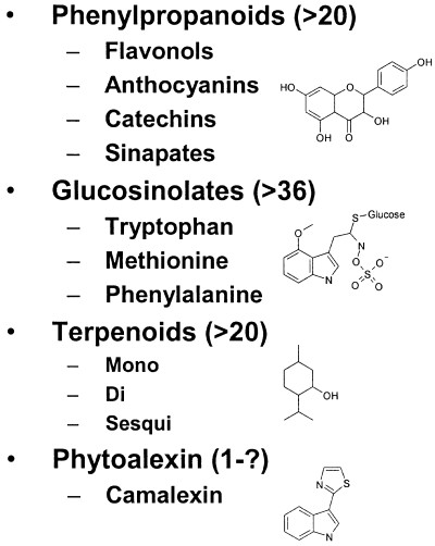 Secondary metabolite classes in Arabidopsis The major secondary