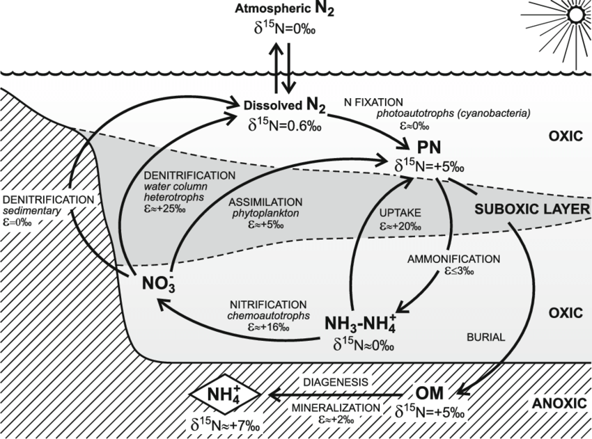 nitrogen cycle easy diagram