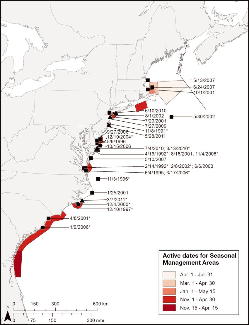 north atlantic right whale diagram