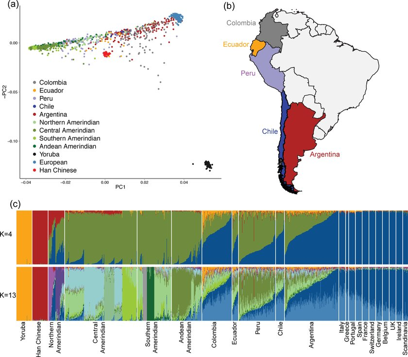 Global ancestry analysis of South American populations (a