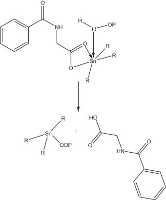 Suggested mechanism of photostabilization of complexes as peroxide