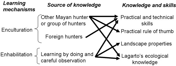 Sources of knowledge and skills acquired throughout different