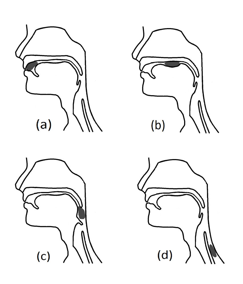 diagrams of the stages of swallow
