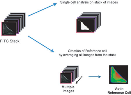 Building a Reference Cell Download Scientific Diagram