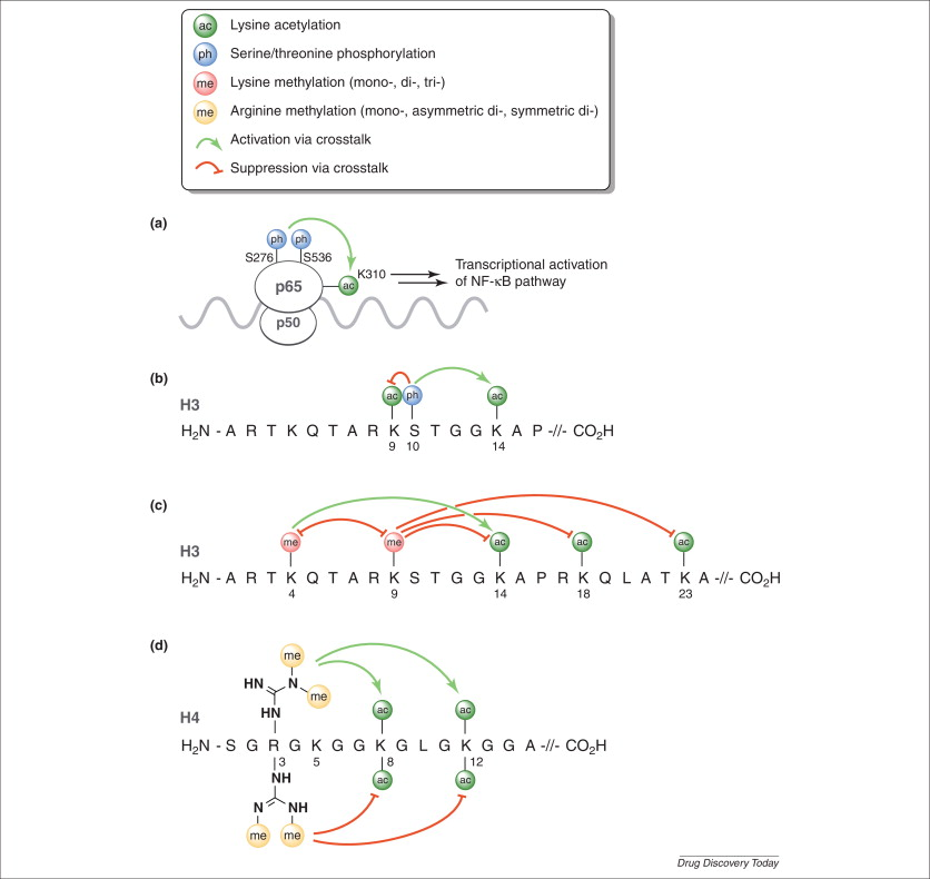 Examples of various post-translational modifications (PTMs) and