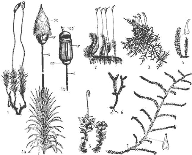 diagram of polytrichum