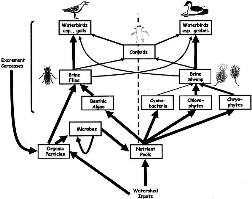 organic food diagrams