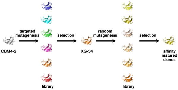 CBM selection and evolution scheme Scheme showing the route of CBM
