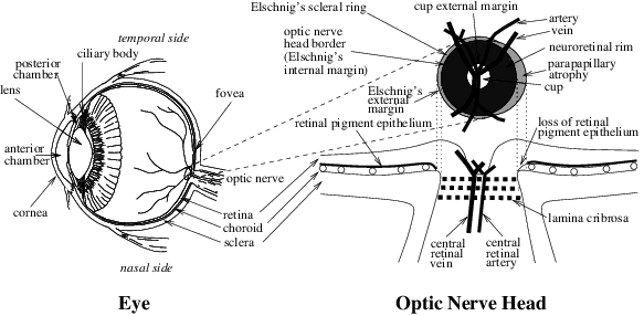 eye diagram and functions above view