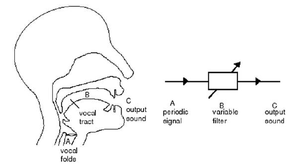 voice production diagram