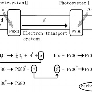 z wave block diagram auto electrical wiring diagramblock diagram of photoacoustic microscopy system combined
