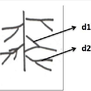 rugae diagram