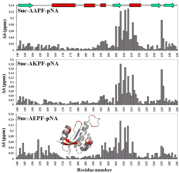 Chemical shift mapping of PrsA-PPIase during Suc-AXPF-pNA titrations - titrations