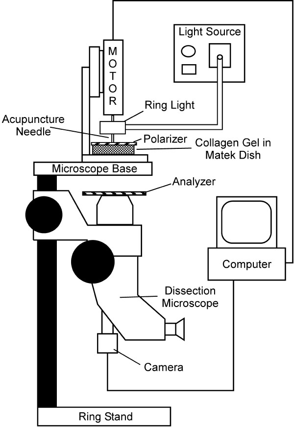 Schematic of polarized light microscopy system A dissection