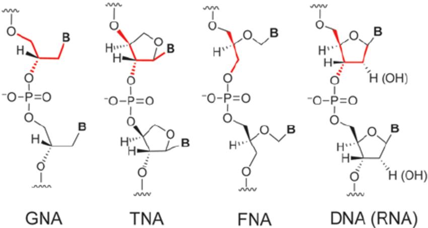 deoxyribose dna base diagram