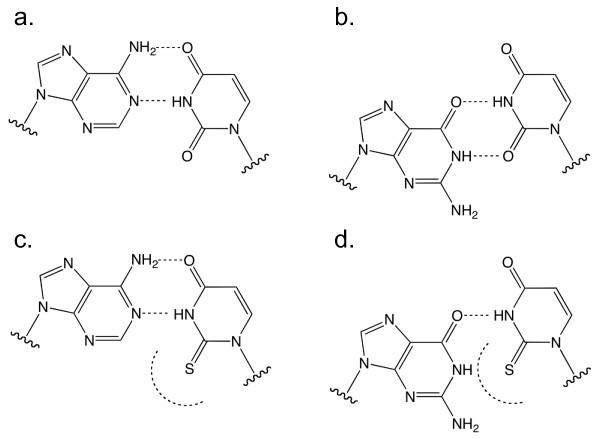 enzymatic pathway simple diagram