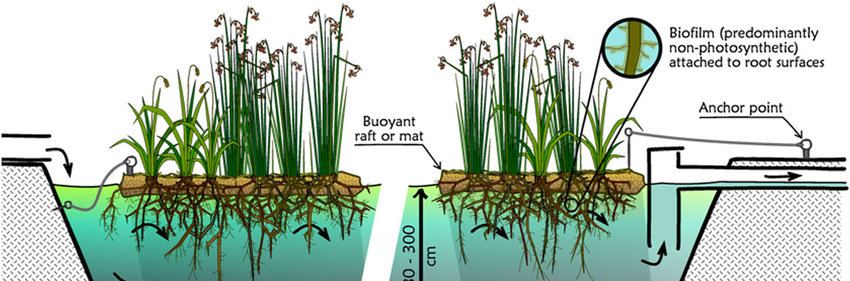 4 Schematic of a typical floating treatment wetland system