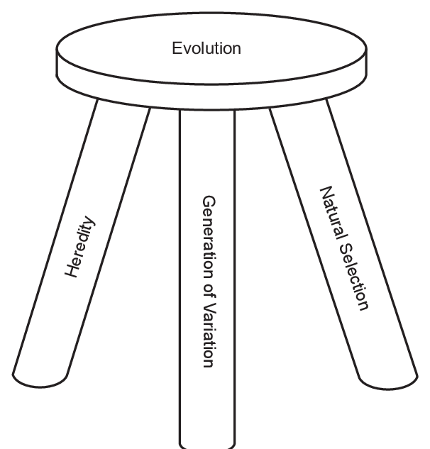 diagram of stool