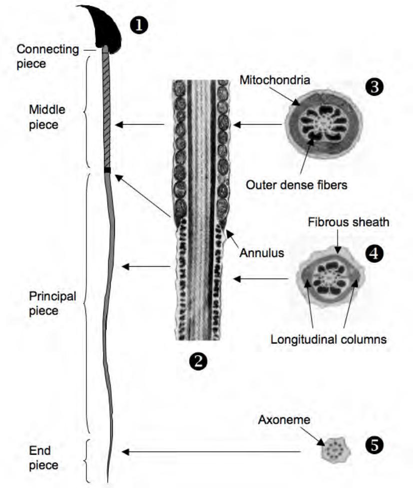 context diagram microsoft visio