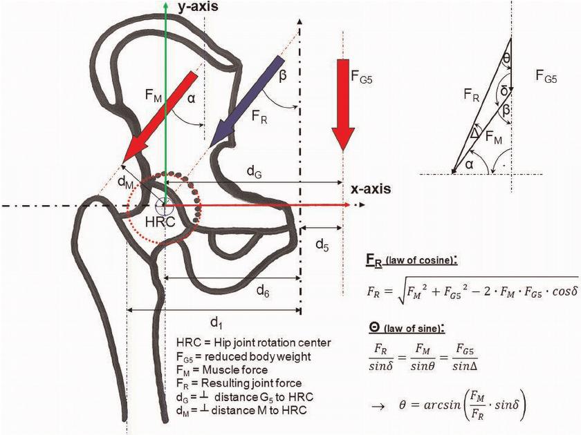 body diagram moment