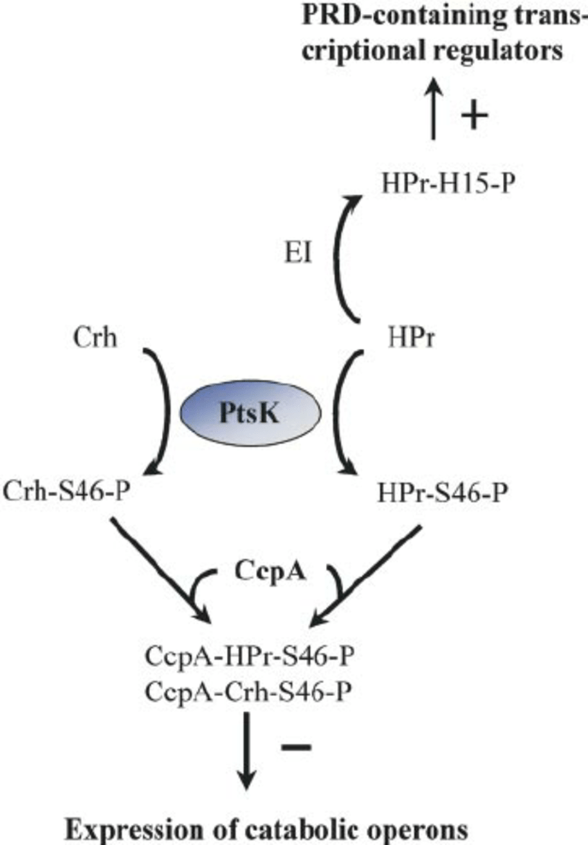 enzymatic function diagram