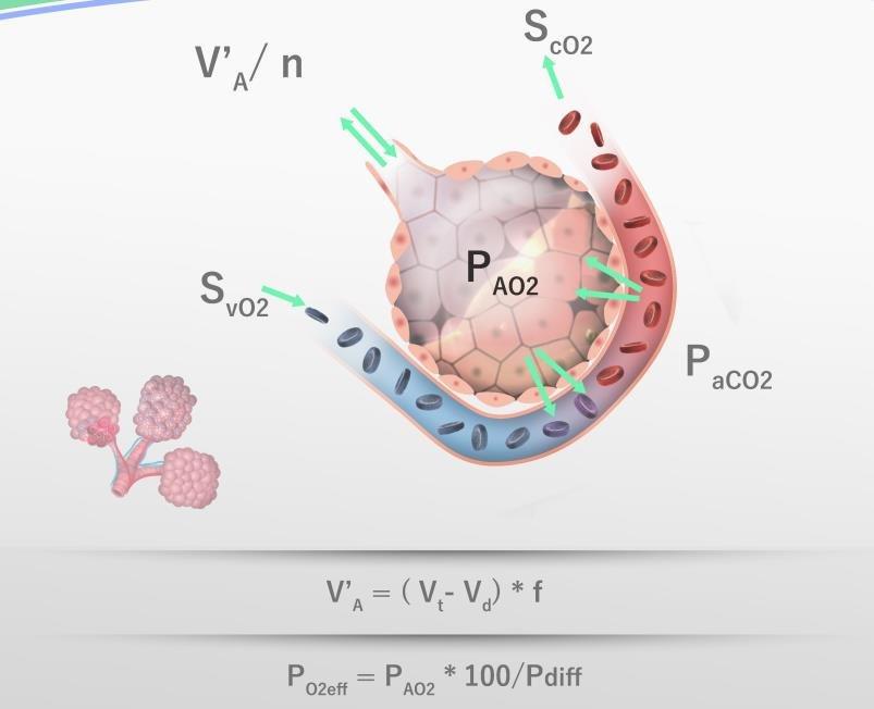 Alveolar gas exchange, explanations see text Download Scientific