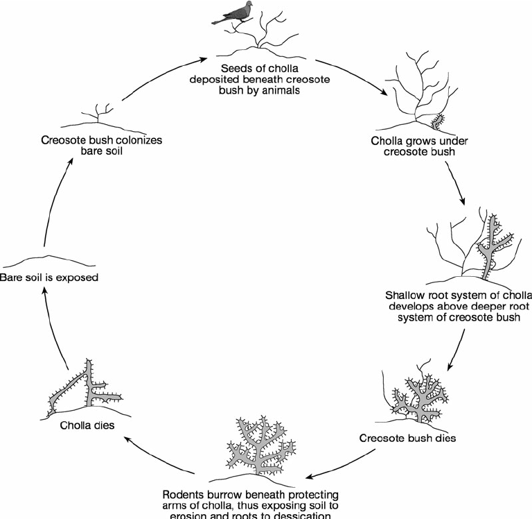 tree cycle diagram