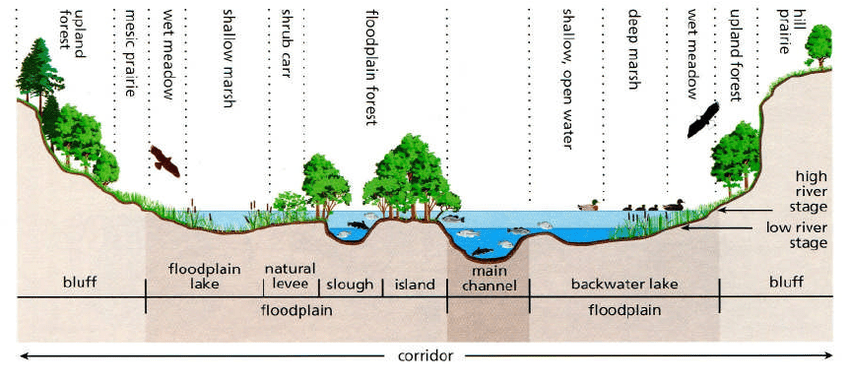 Cross Section Of A River Corridor The Main Components Of