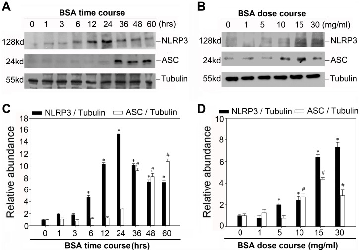A Western blot analysis showed the expression of NLRP3 and ASC