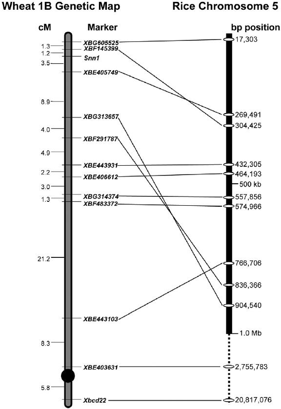 scientific diagram of a spring scale