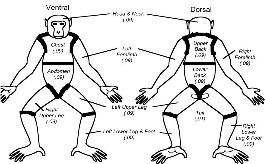 comedone diagram