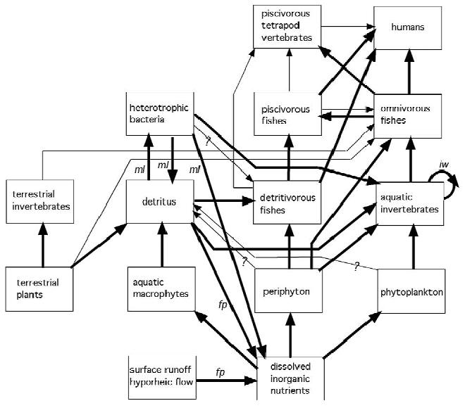 simple ecosystem diagram