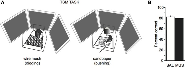 TSM task (A) The TSM task was the same as the SSM task except that