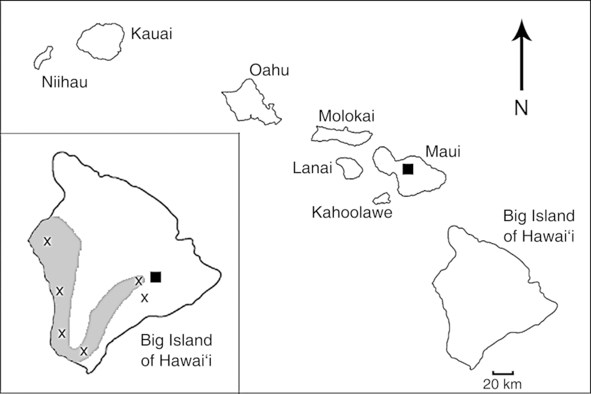 diagram of a hawaiian volcano