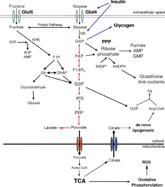 glycolysis blue diagram