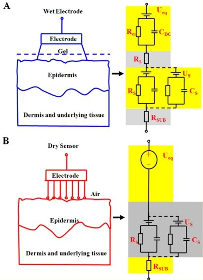 The equivalent circuits of (A) a wet electrode-skin interface and (B