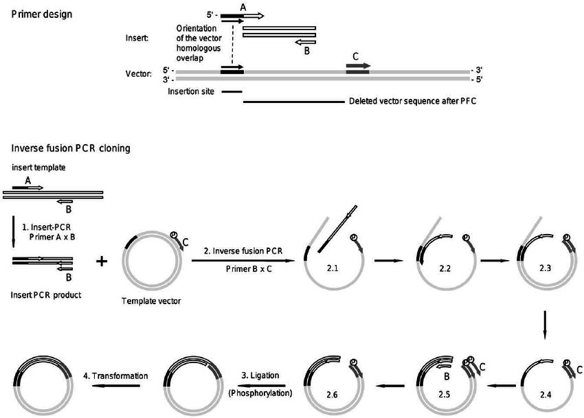pcr schematic diagram