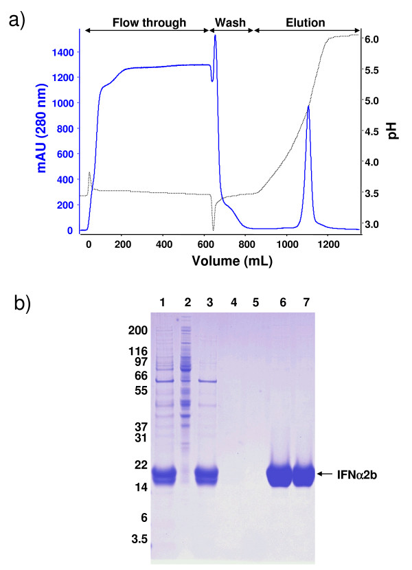 Purification of IFNα2b by cation-exchange chromatography A) A - cation exchange chromatography