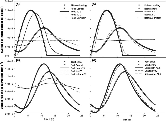 Sensitivity analysis of the coupled dynamic photosynthesis/phloem
