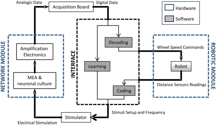 Block diagram of the neuro-robotic architecture From left to right