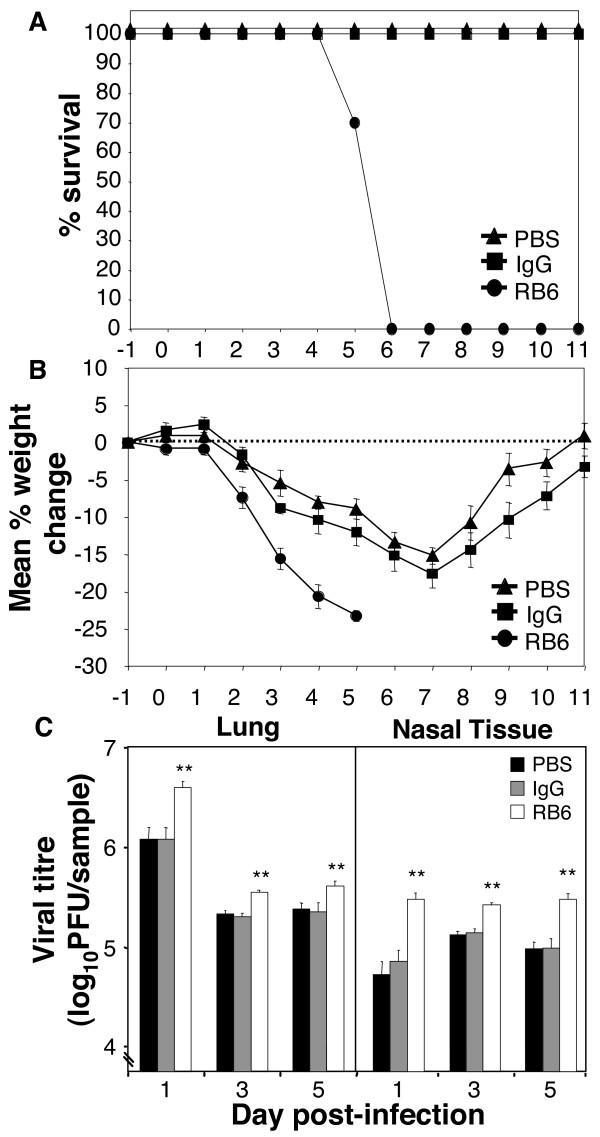 pneumonia virus diagram