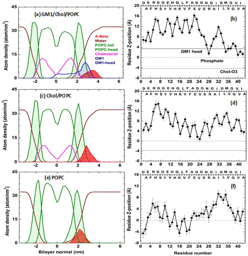 Location and orientation of Ab-monomer at membrane-interfaces (a,c