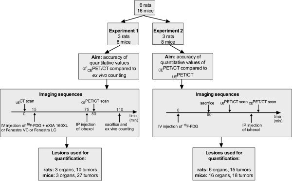 Flow chart of animal experiments Number of animals used in each