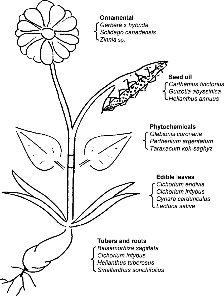 diagram of apple flower