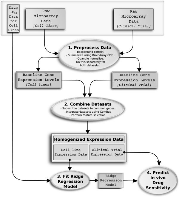 Data flow diagram showing our approach to predicting in vivo drug