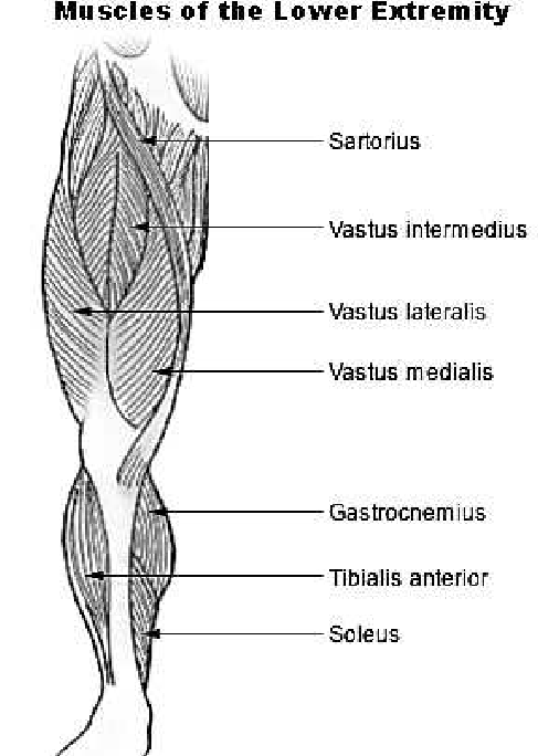 diagram of torn acl