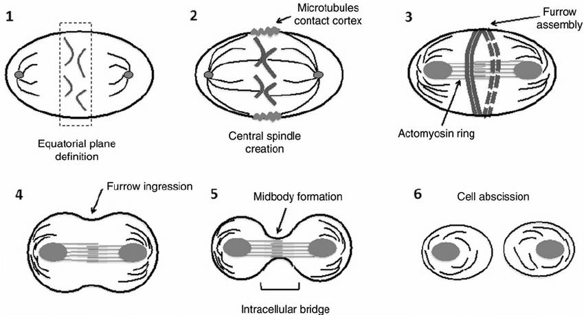 body schematic definition