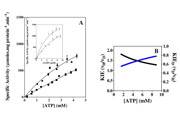 Shikimate kinase activity and KIE Effect of the concentration of