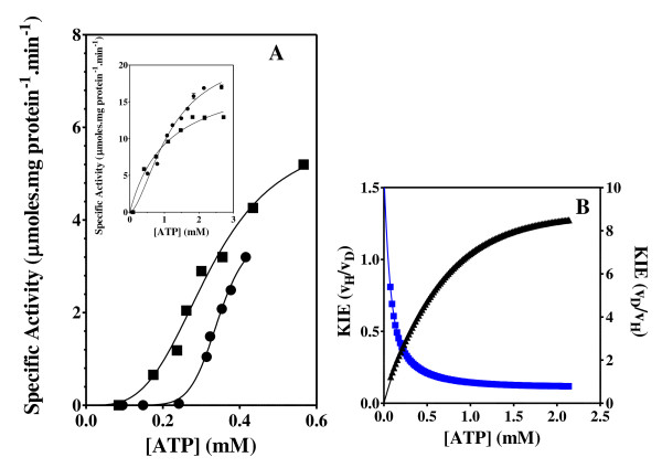Acetate kinase activity and KIE Effect of the concentration of ATP